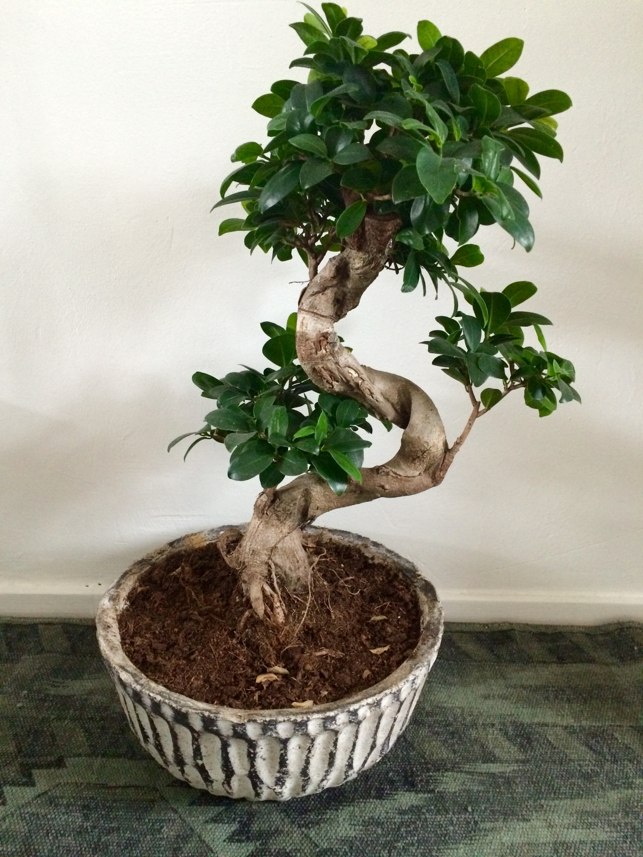 Hippe kamerplanten curls for Hippe planten